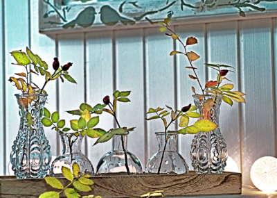 Galerija fotografija Green House Divcibare Vaznice Sa Ogledalom